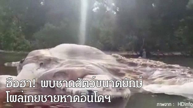 ฮือฮา! พบซากสัตว์ขนาดยักษ์ โผล่เกยชายหาดอินโดฯ